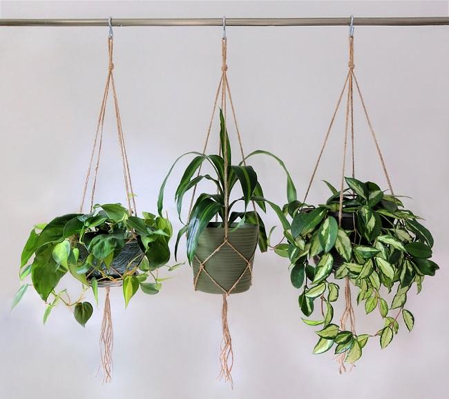 Hangplanten aan de wand
