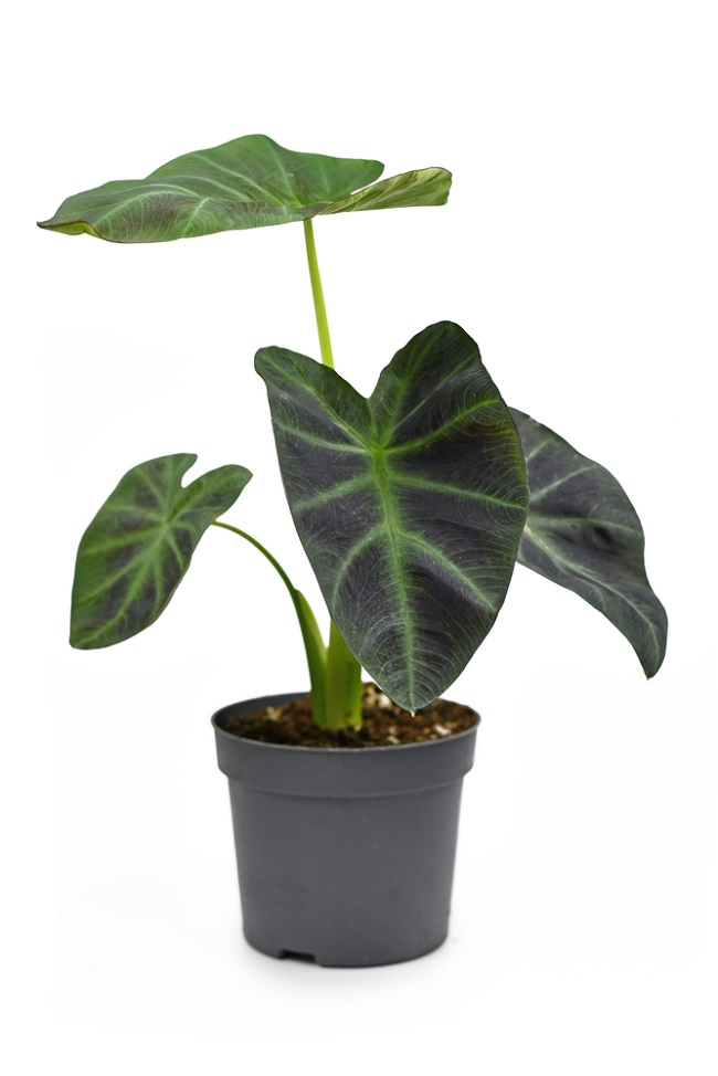 Planten in modern interieur