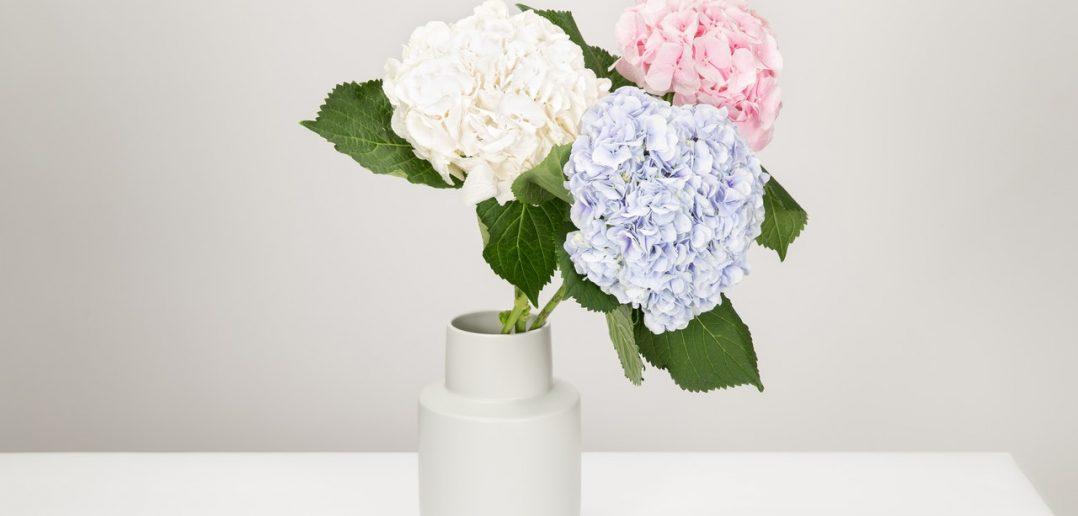 De voordelen van bloemen in huis