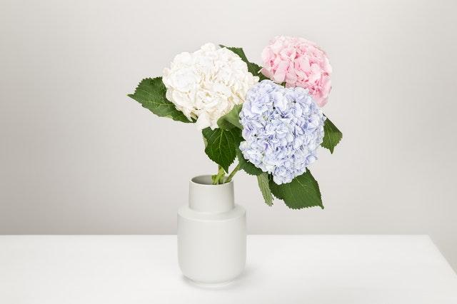 Bloemen in huis: voor een levendig interieur