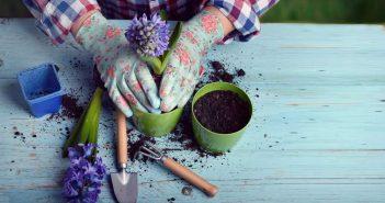 Deze tips mag je niet missen als beginnende tuinier