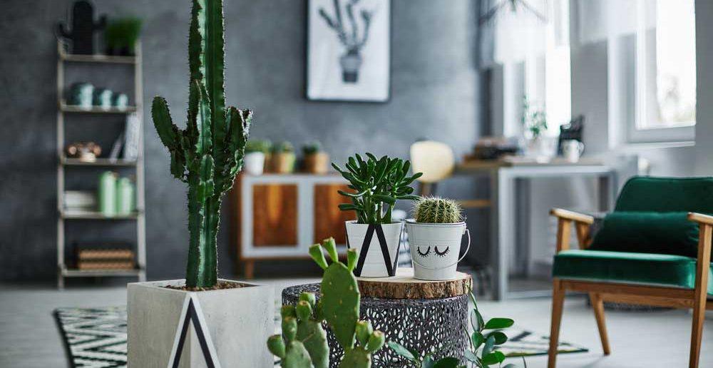 Cactussen: ideaal als je geen groene vingers hebt