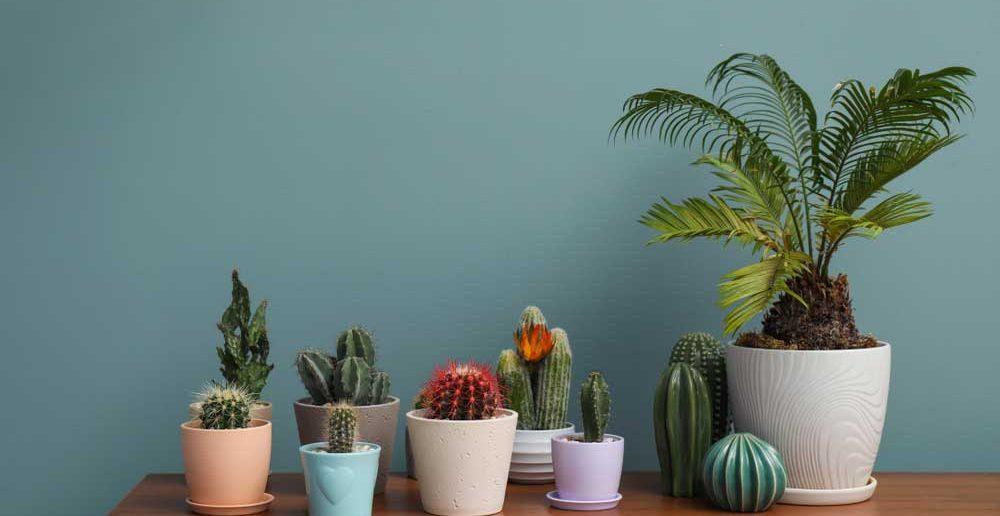 Leuk: een vrolijke kleur in huis met bloempotten