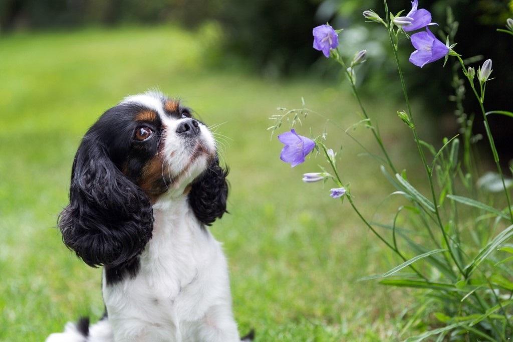 Hondvriendelijk tuin