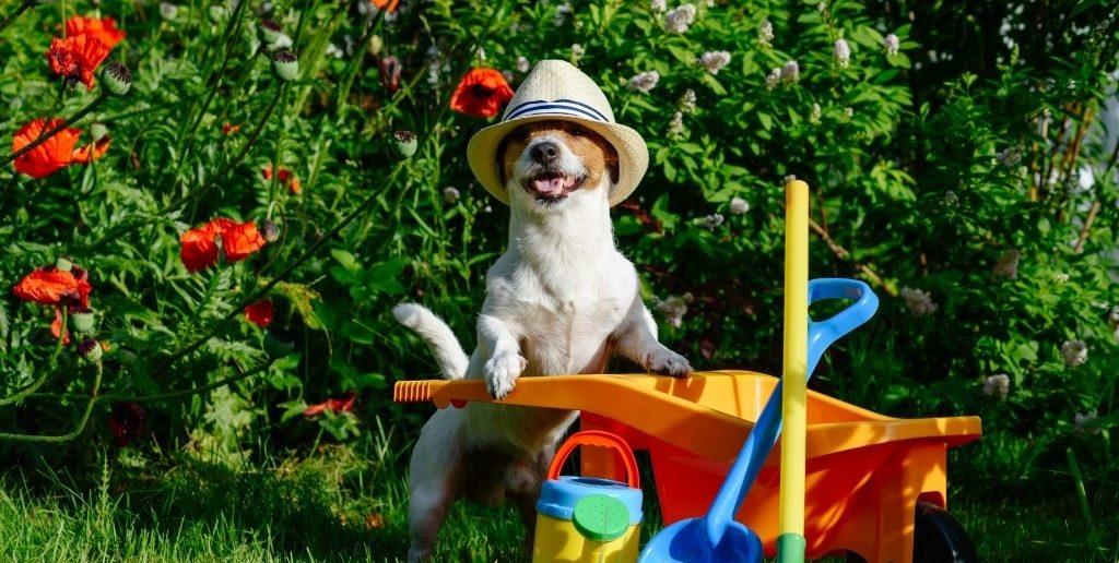 Hondvriendelijke tuin