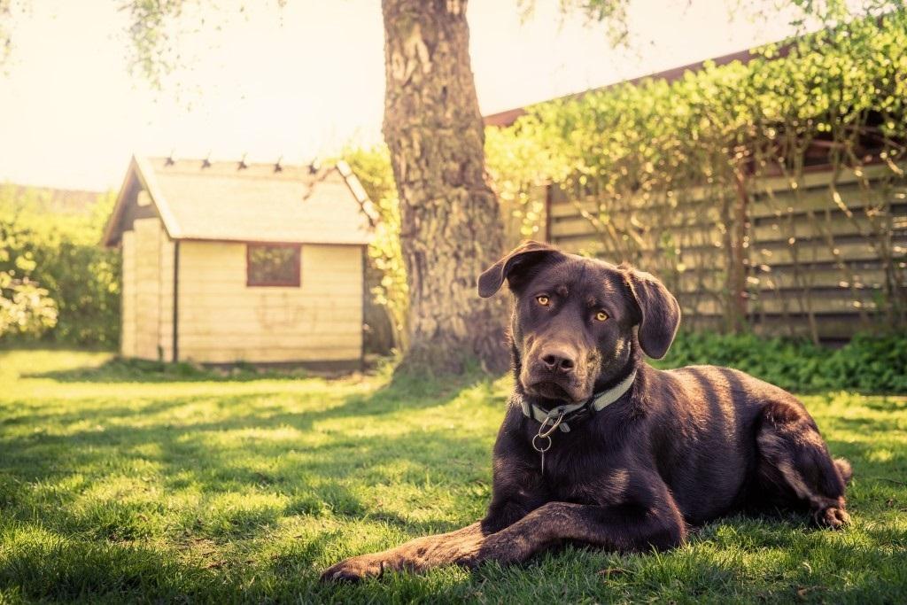 Tuin hondvriendelijk