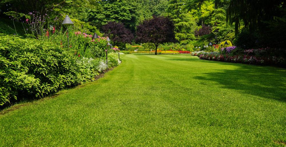 Gras in de tuin: zo verzorg je het