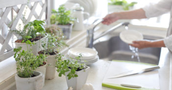 Ideaal en mooi in de keuken: kruidenplanten