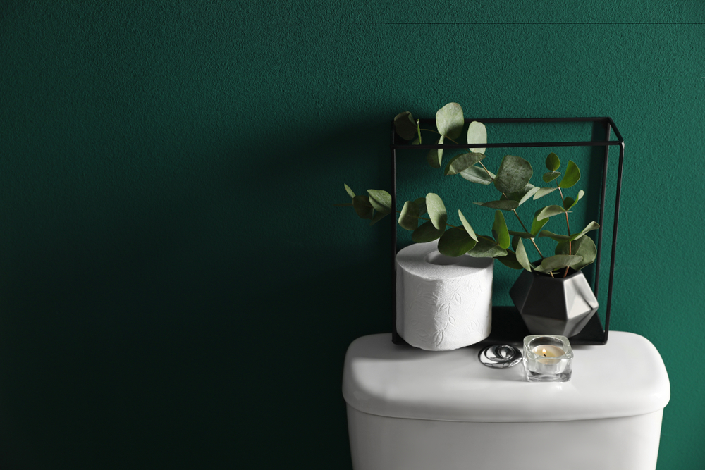 Planten op het toilet: zo houd je ze in leven