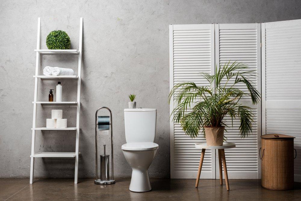 Dit zijn de juiste planten voor op de wc