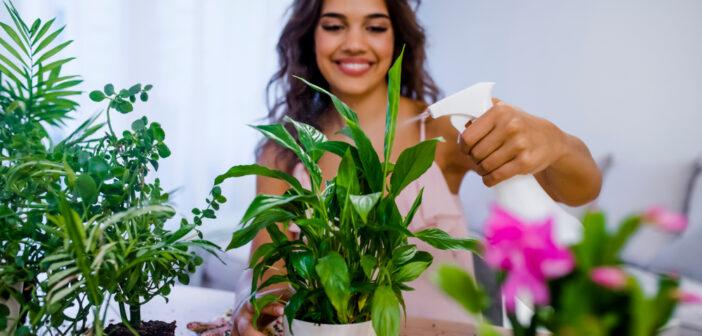 Gaan je kamerplanten dood? Dit kan er aan de hand zijn!