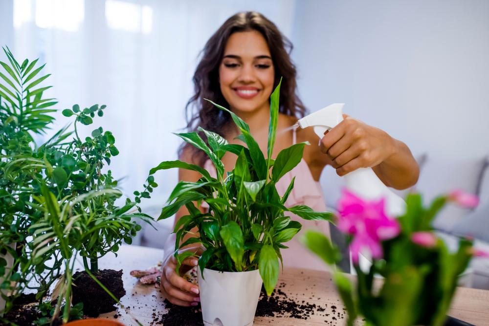 Kamerplanten gaan dood: tips voor verzorging van je planten