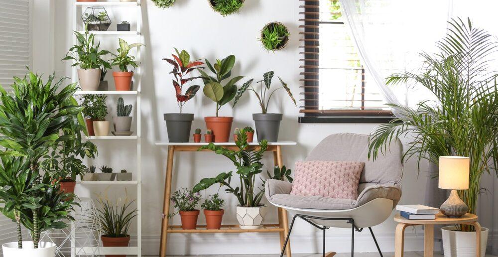 Meer met planten in je interieur 9 leuke voorbeelden
