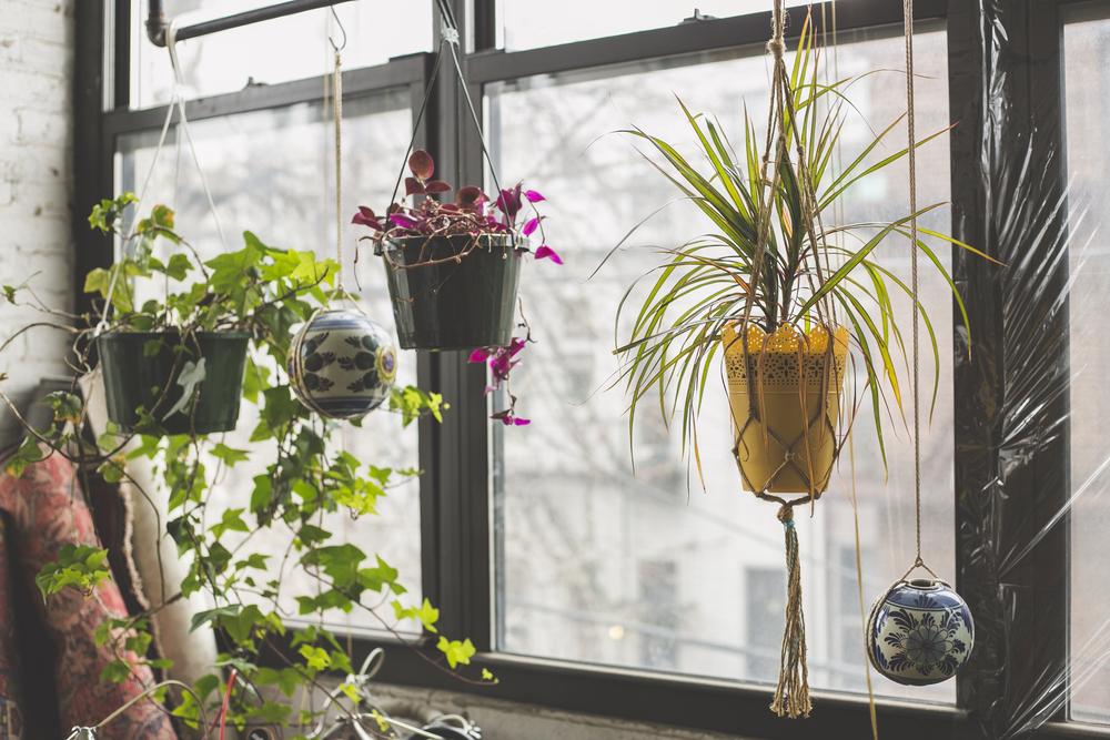 Lekker veel planten in een boho interieur