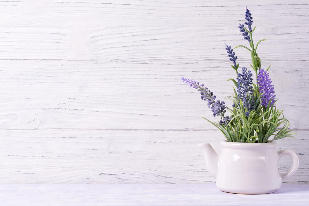 Lavendel als lekker ruikende kamerplant