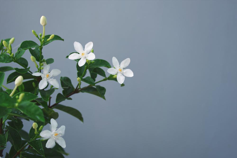 Op zoek naar geurende kamerplanten in huis? Dit zijn onze 7 tips!