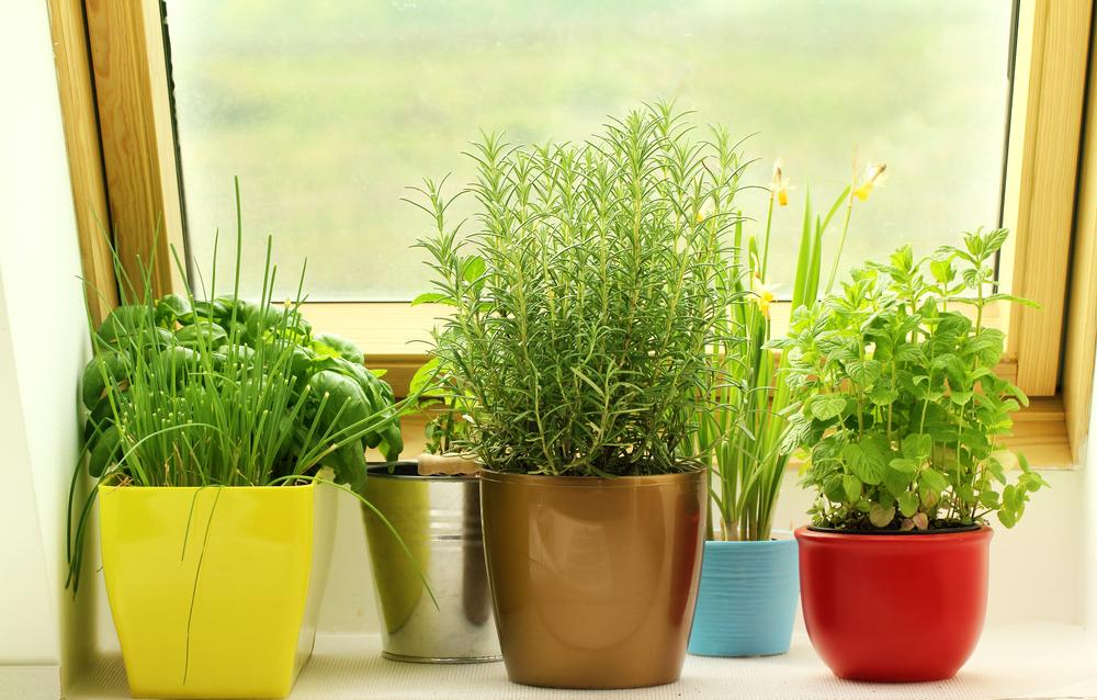 Lekker geurende planten: kruiden in huis