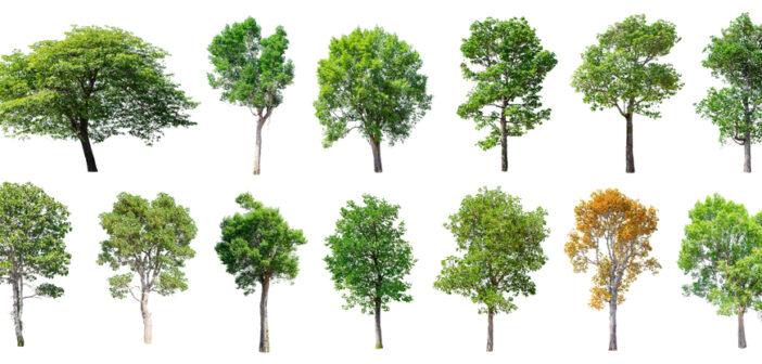Wat zijn mooie bomen om in je tuin te plaatsen?