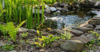 5 Vijverplanten om in je vijver te planten
