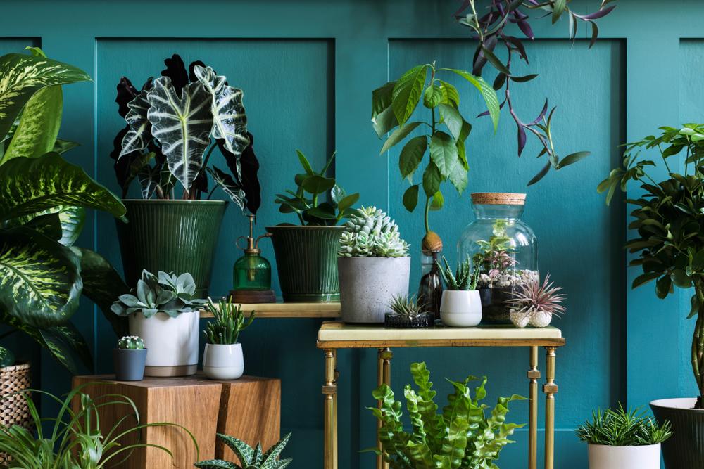 Mooie plantenpotten in verschillende kleuren