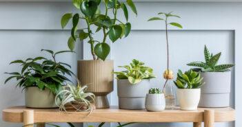5 tips en tricks: hoe kies je de leukste plantenpotten uit?