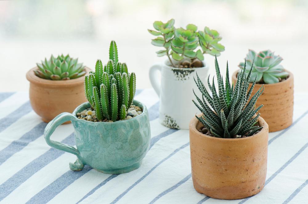 Leuke plantenbakken: DIY project
