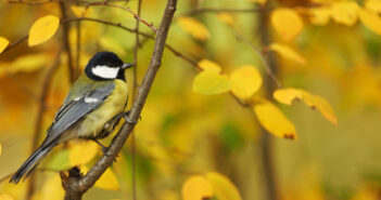 Meer vogels naar je tuin lokken? Het lukt met deze 3 slimme tips!